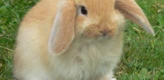 Los conejos: mascotas muy especiales