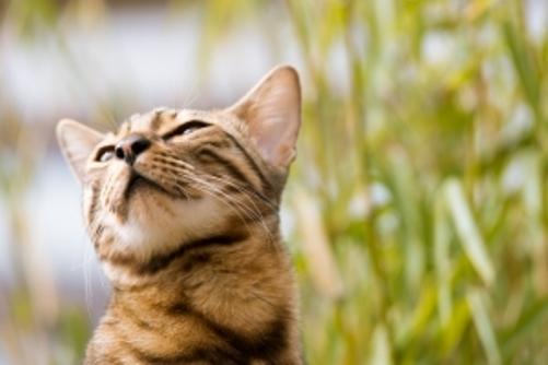 desparasitar gato: