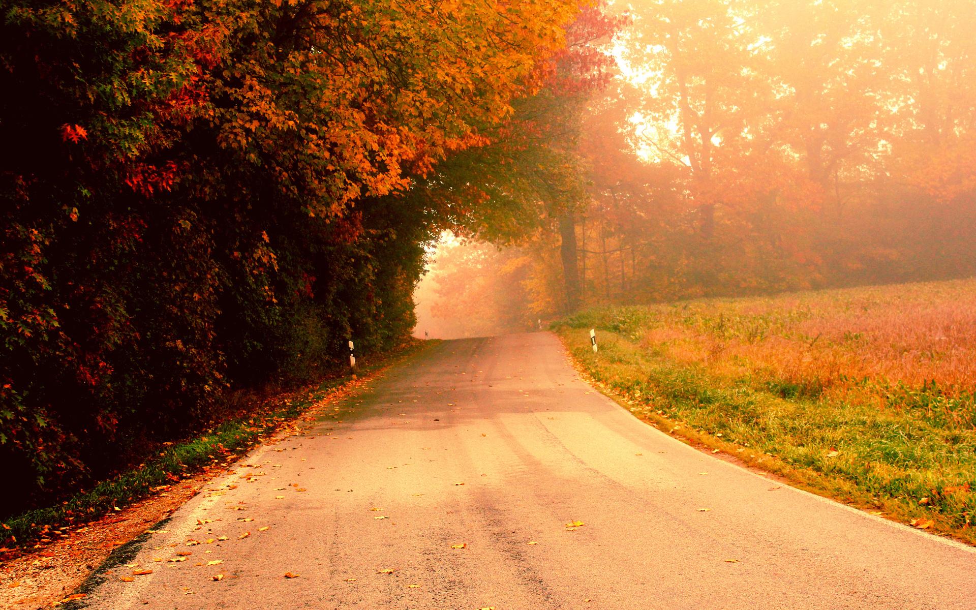 Free Fall Tree Wallpaper Autumn Lane Desktop Wallpaper