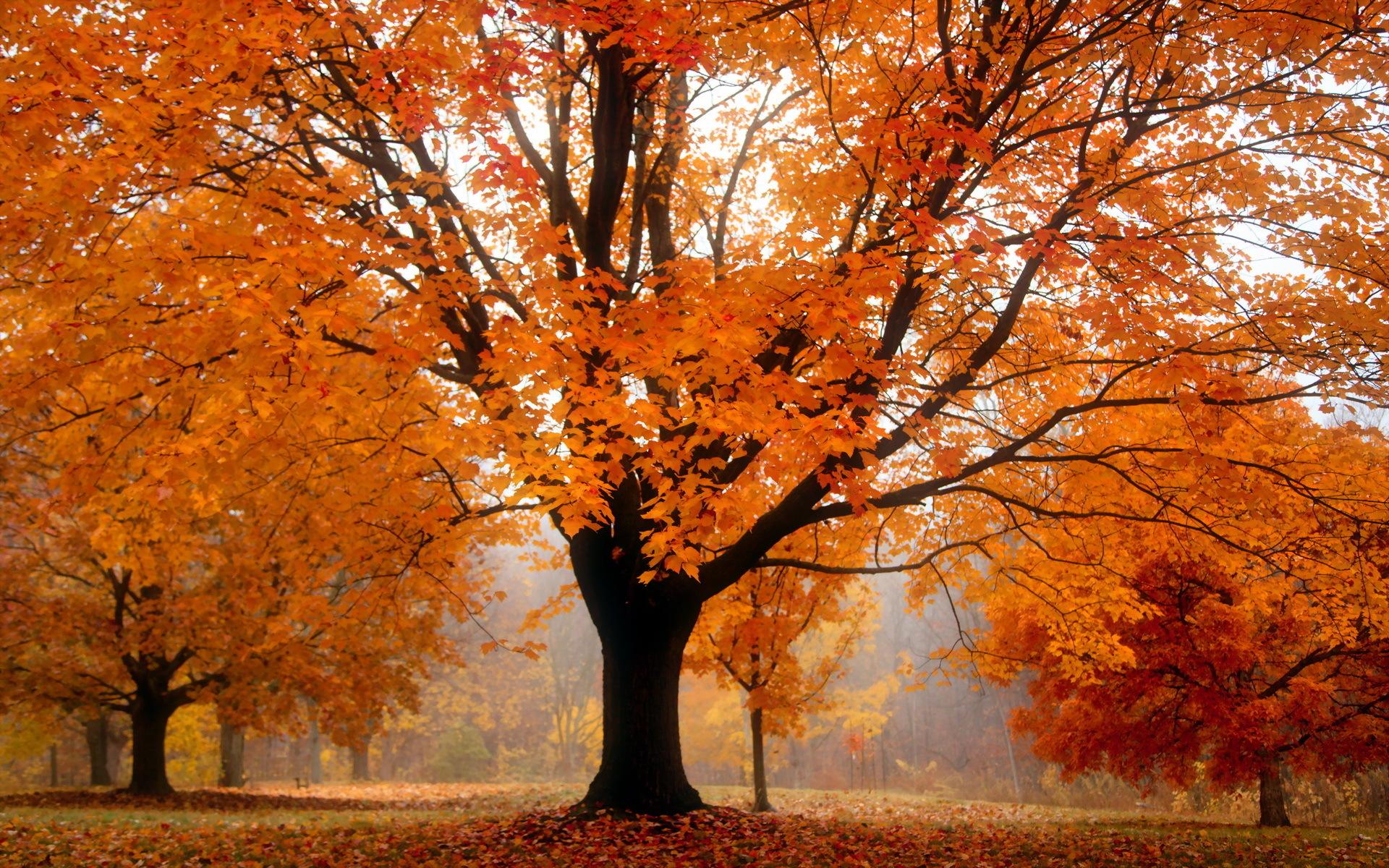 Seasonal Fall Coffee Desktop Wallpaper Autumn Sentinal Desktop Wallpaper