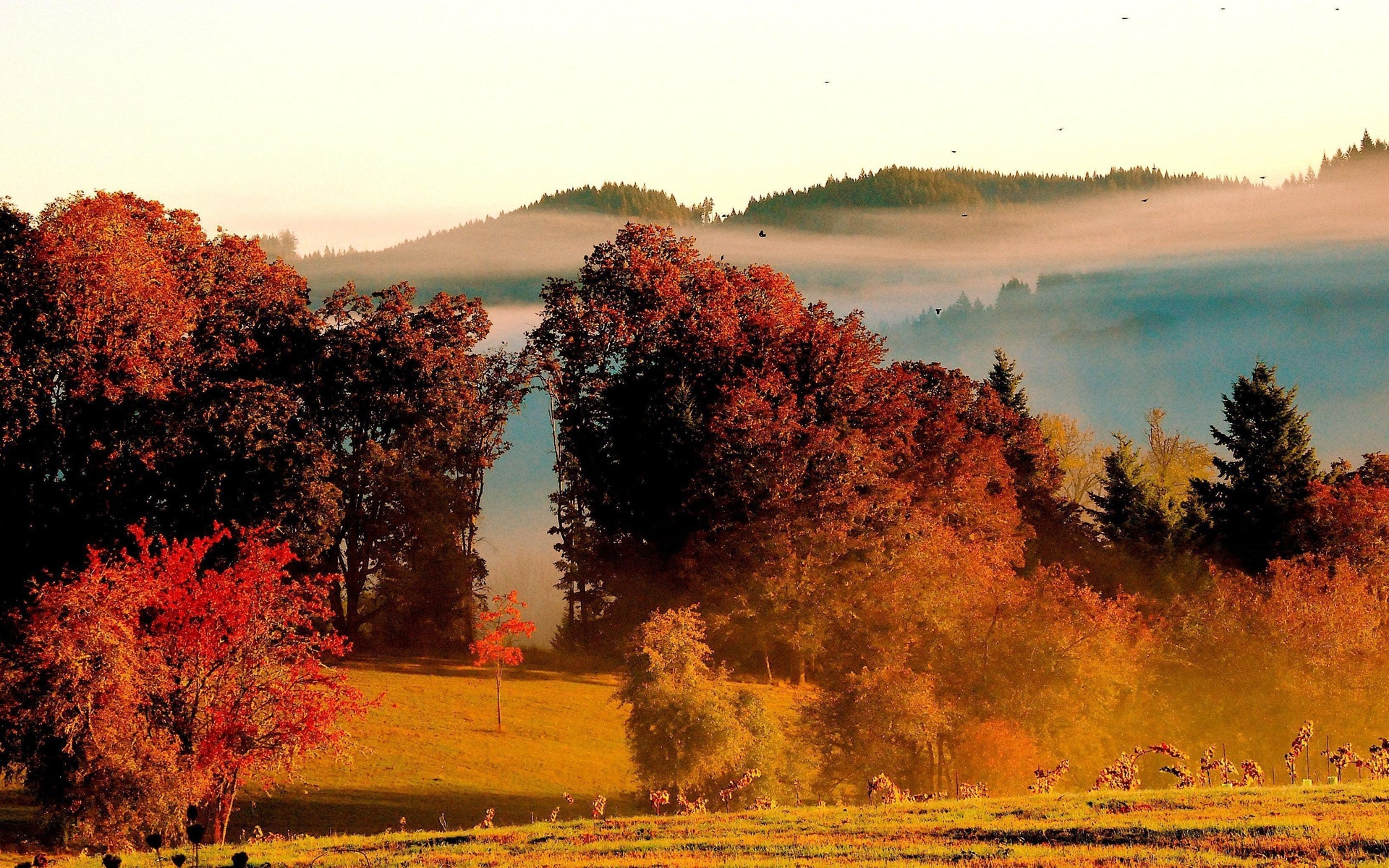 Portland Or Fall Had Wallpaper Eugene Oregon Fall Colors At King Estate Winery By Don