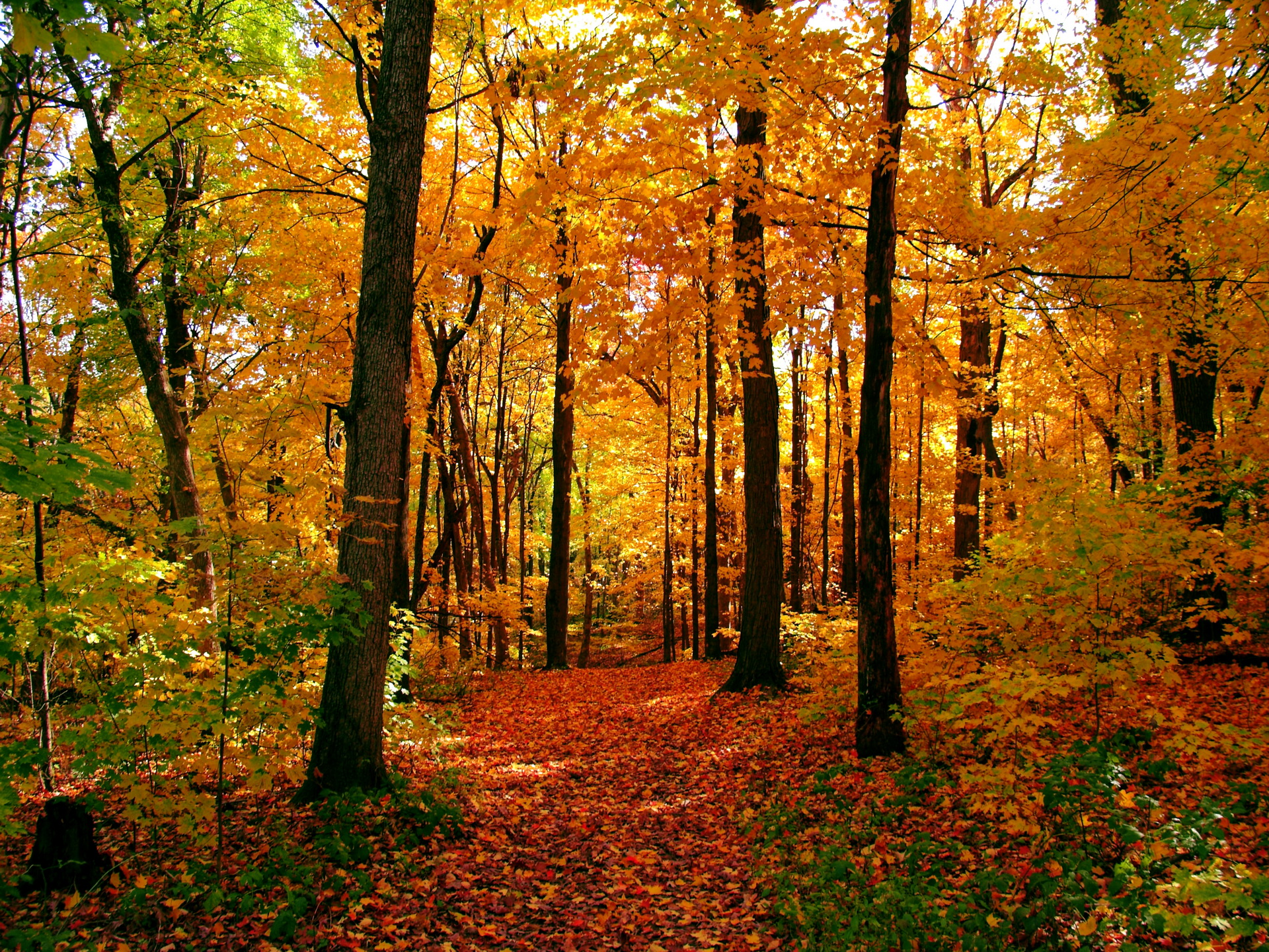 Fall Leaves Pathway Computer Wallpaper Autumn Colors By Brian L Desktop Wallpaper