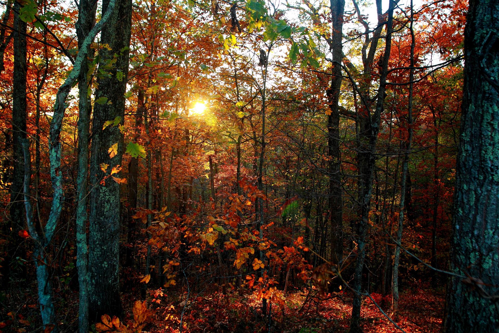 Gloomy Fall Wallpaper West Virginia By Forestwander Com Desktop Wallpaper