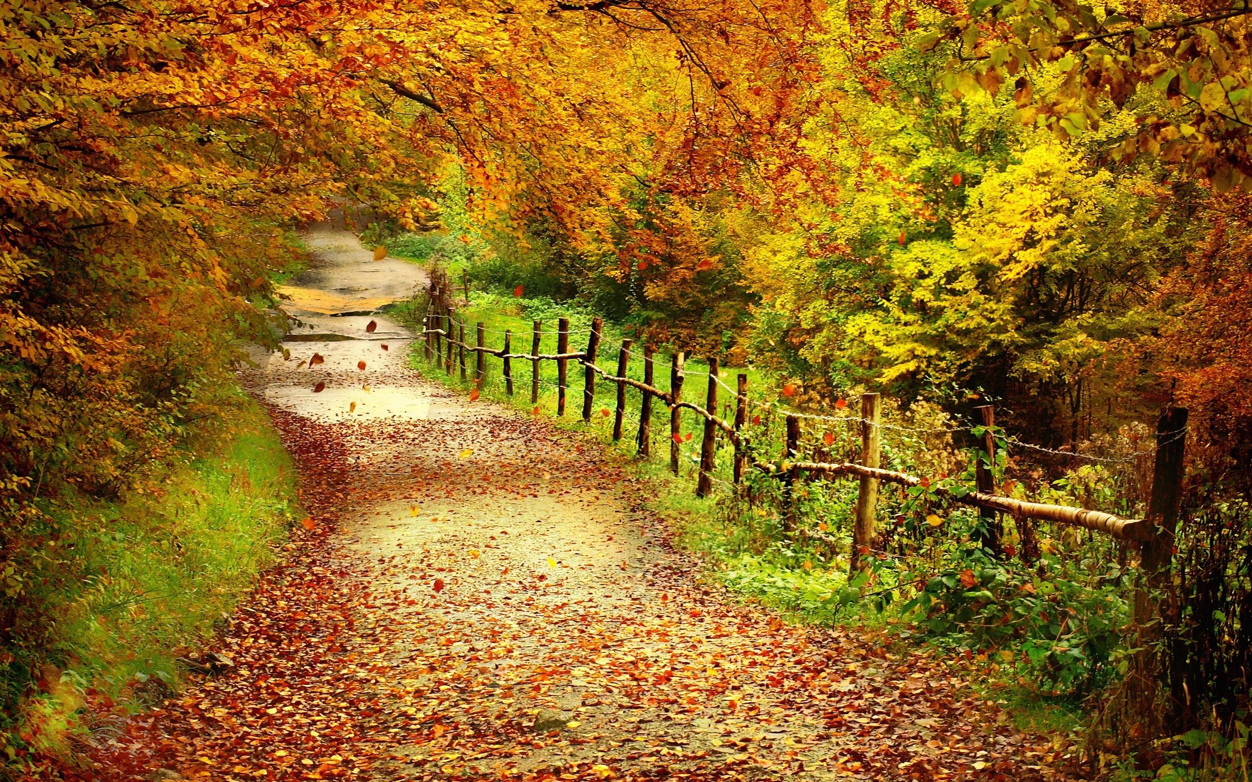 Fall Leaves Pathway Computer Wallpaper Autumn Scenes Desktop Wallpaper