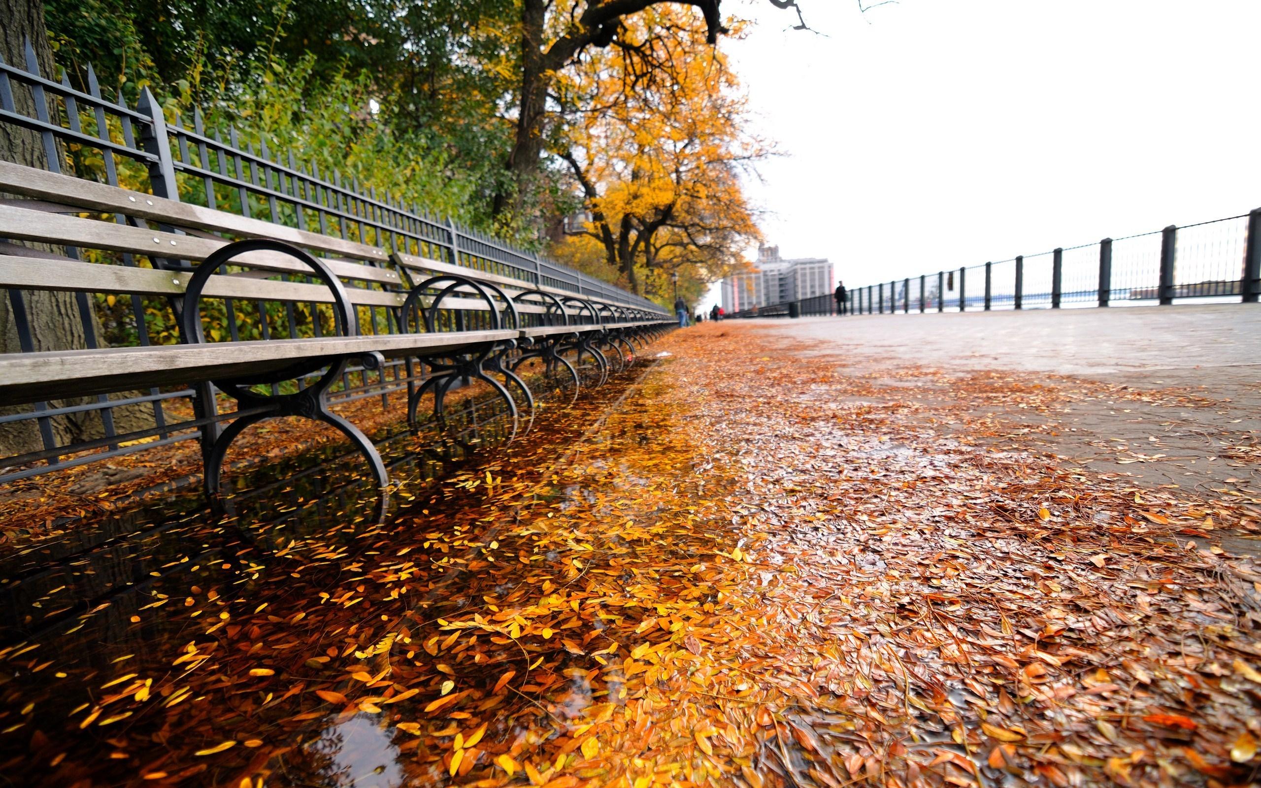 Fall Leaves Pathway Computer Wallpaper New York Waterfront Autumn Scene Desktop Wallpaper