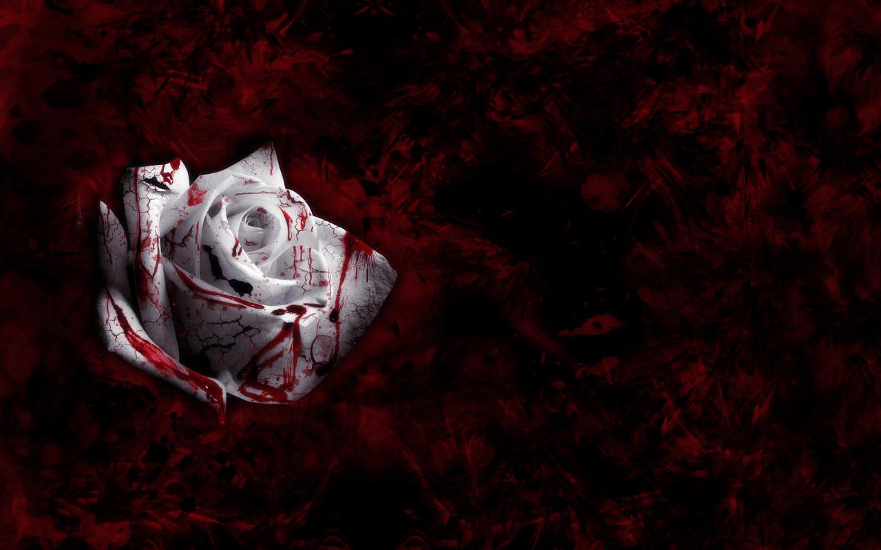 Blood Money Wallpaper Hd Rose Wallpaper Blood Rose Wallpaper