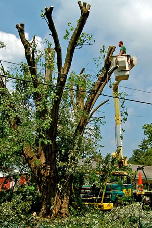 SoFlo-TreeService, Tree Topping and Tree Shaping in South Florida