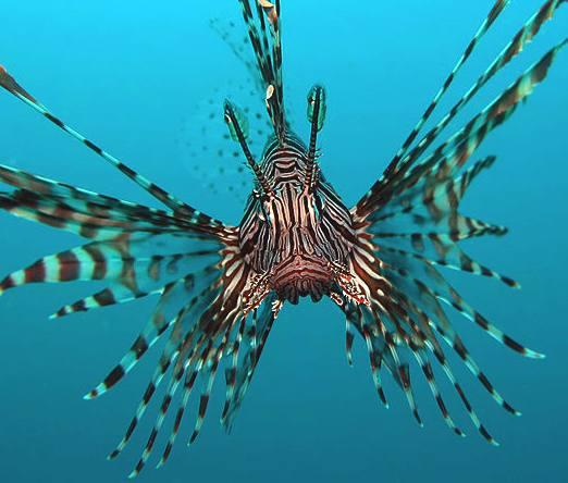 Best 3d Moving Wallpapers For Desktop Fish