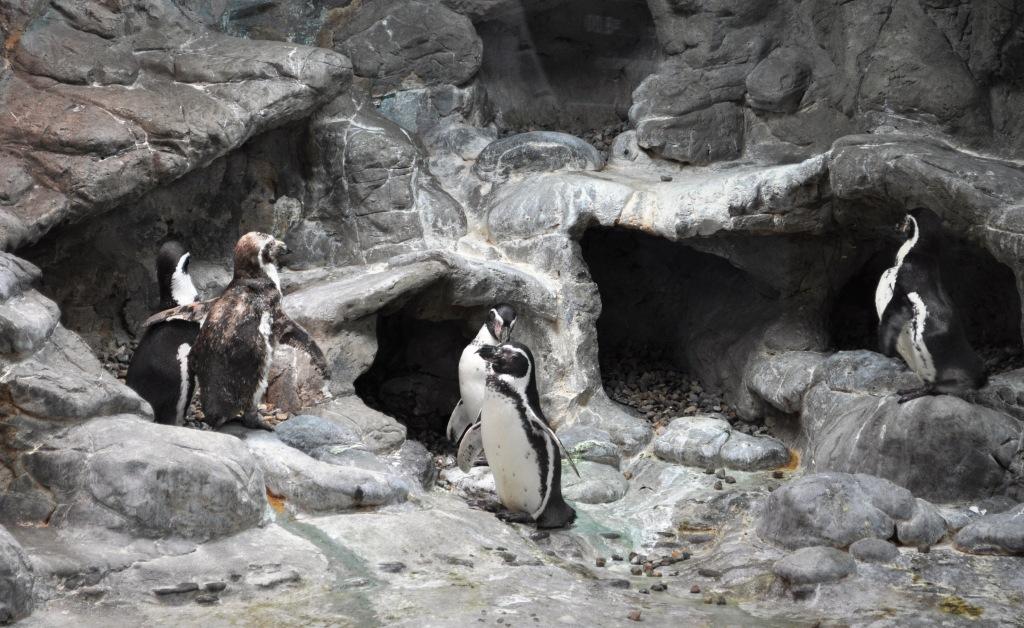 Penguin Encounter At Aquarium Of Niagara In Niagara Falls
