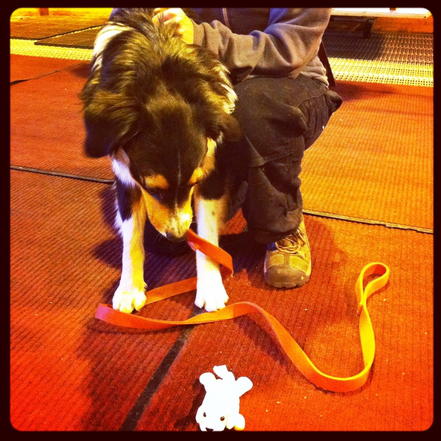 Cottonelle Puppy's TBEX 2012 Adventure in Photos | Solo ...