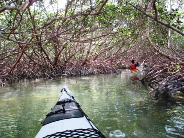 Kayaking the Florida Keys with Burnham Guides - A Mangrove Tunnel, Marathon, Fla., Dec. 8, 2013