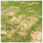 DIY Lawn Care Advice With Professional Lawn Care Products