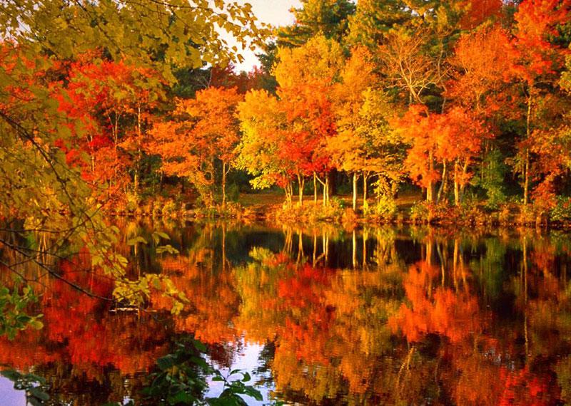 Vermont Fall Wallpaper Foliage L Incredibile Spettacolo Dei Colori D Autunno