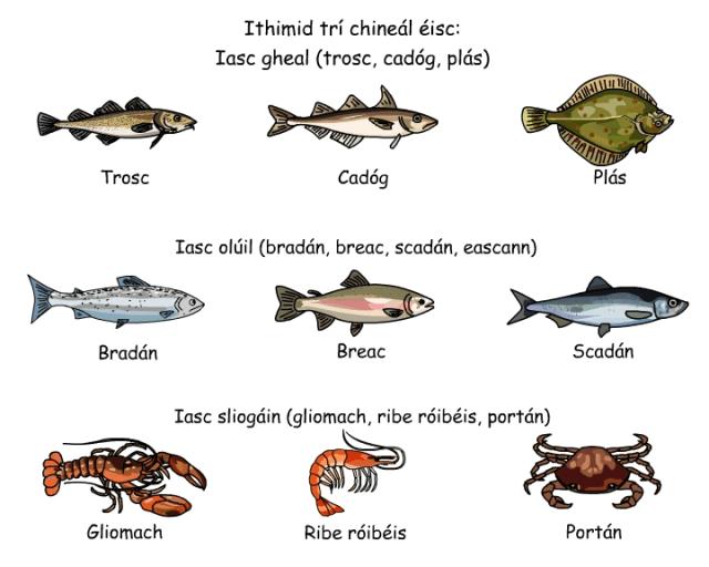 Irish White Fish, Oily Fish and Shellfish, in Gaelic. pic