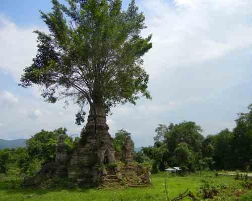 tree-temple