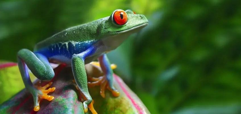 do-frogs-hibernate