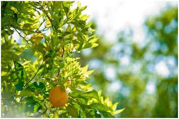 spacing-fruit-trees