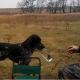 """El perro, que realmente es """"el mejor amigo del hombre"""""""