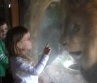 Niña se enfrenta a león