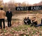 whiterabbits