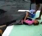 El delfín violador