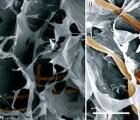 tejidobionico