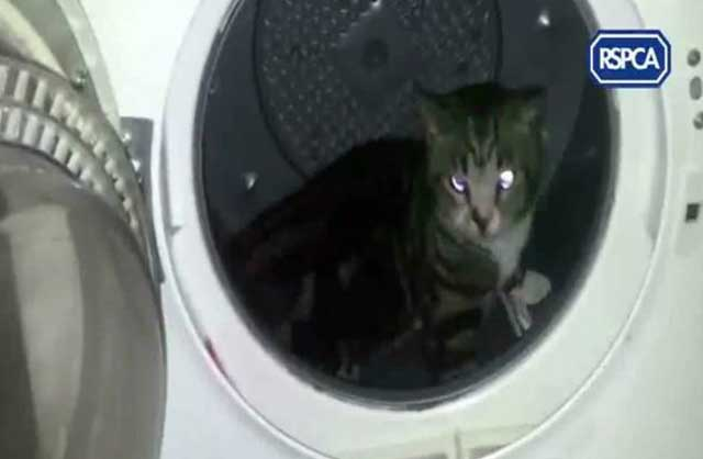 gato_lavadora_crueldad_