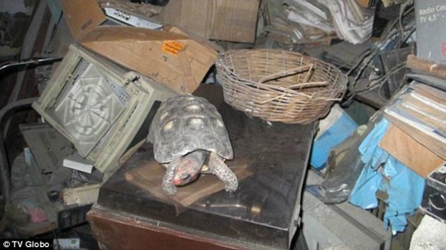 La tortuga Manuela 1