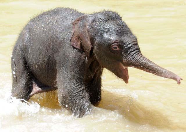 mama_hijo_elefantes_3