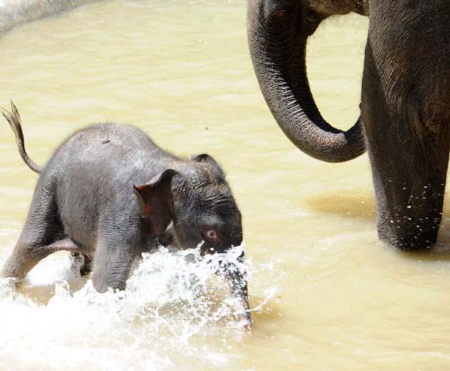 mama_hijo_elefantes_6