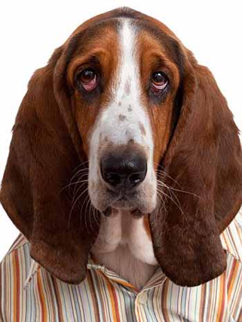 perros_camisas_11
