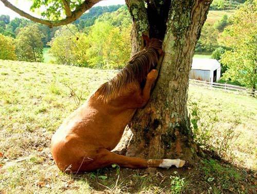 ad_caballo_