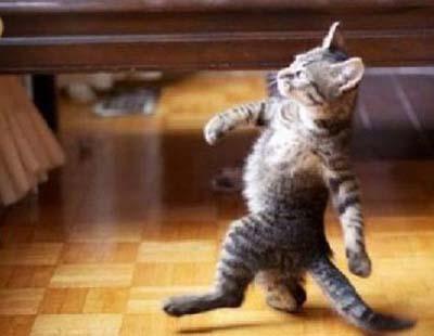 ad_gato_caminando_