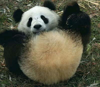 ad_panda_obsceno_