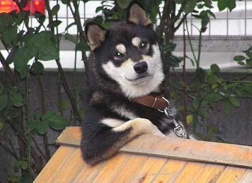 ad_perro_posando_