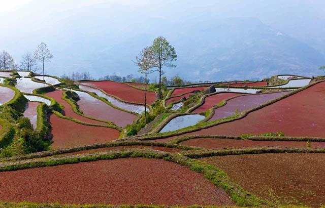 campo_arroz_chino_5