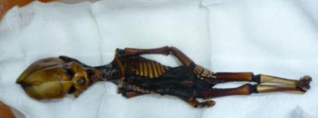 Esqueletos y calaveras extraterrestres reales en Perú, Discovery Max.