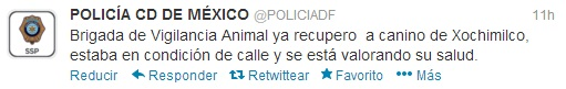 tuit_perro_pdf