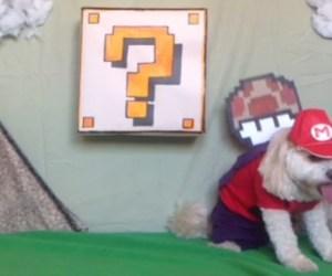 Super-Mario-Dog