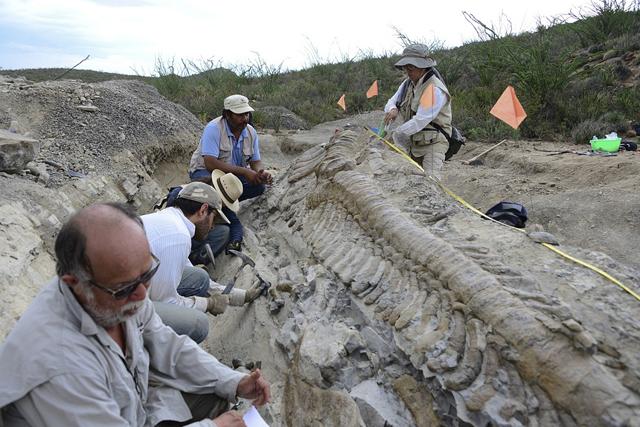 cola dinosaurio hadrosaurio mexico