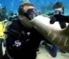 Y en la nota idiota del día... Estas son las consecuencias de besar a un tiburón