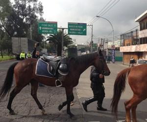 caballos policia montada df
