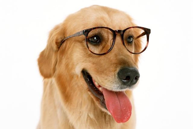 perro lentes