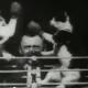 Thomas Alva Edison obliga a boxear a dos gatos