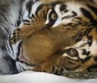 Las mejores fotos del Reino Animal durante el 2013