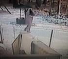 Video: Violento ataque de un gato a una joven que defendía a su perro