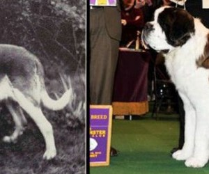 Así han cambiado algunas razas de perros durante los últimos 100 años