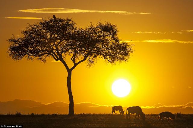 golden hour 2