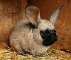 Galería: Los animales híbridos más locos del mundo