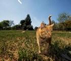 El paraíso de los gatos en la tierra